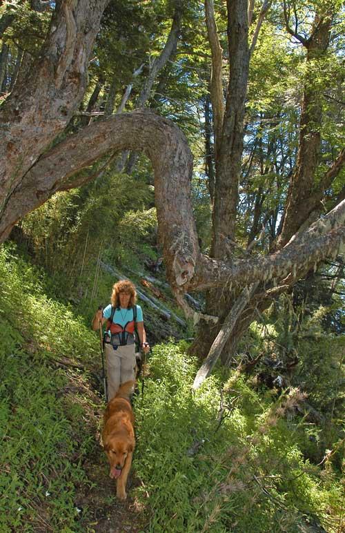 Trekking-at-Peuma-Hue-3
