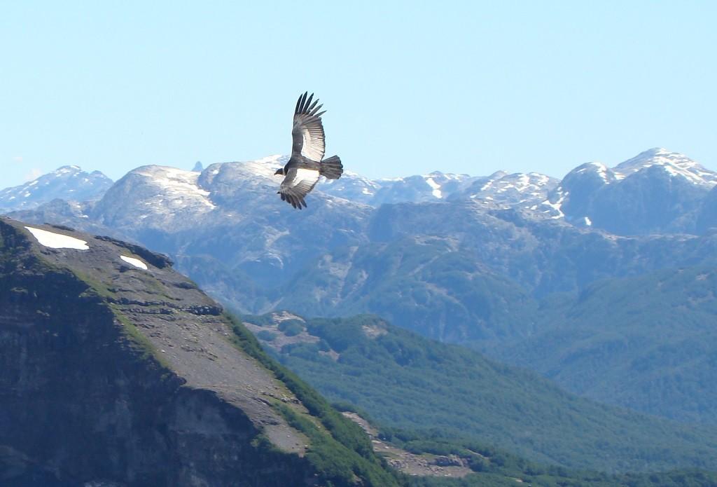 condor watching in Bariloche