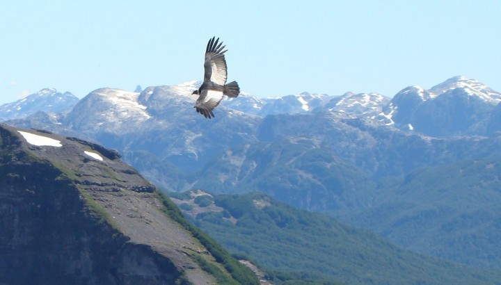 Condor watching in Bariloche
