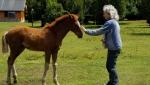 Conexion con los animales